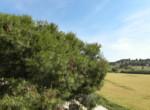 Ref. 1358 finca de turismo rural pedanias, inmocruz vende (21)