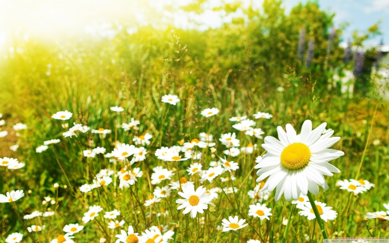 La Primavera nos llena de energía y alegría.